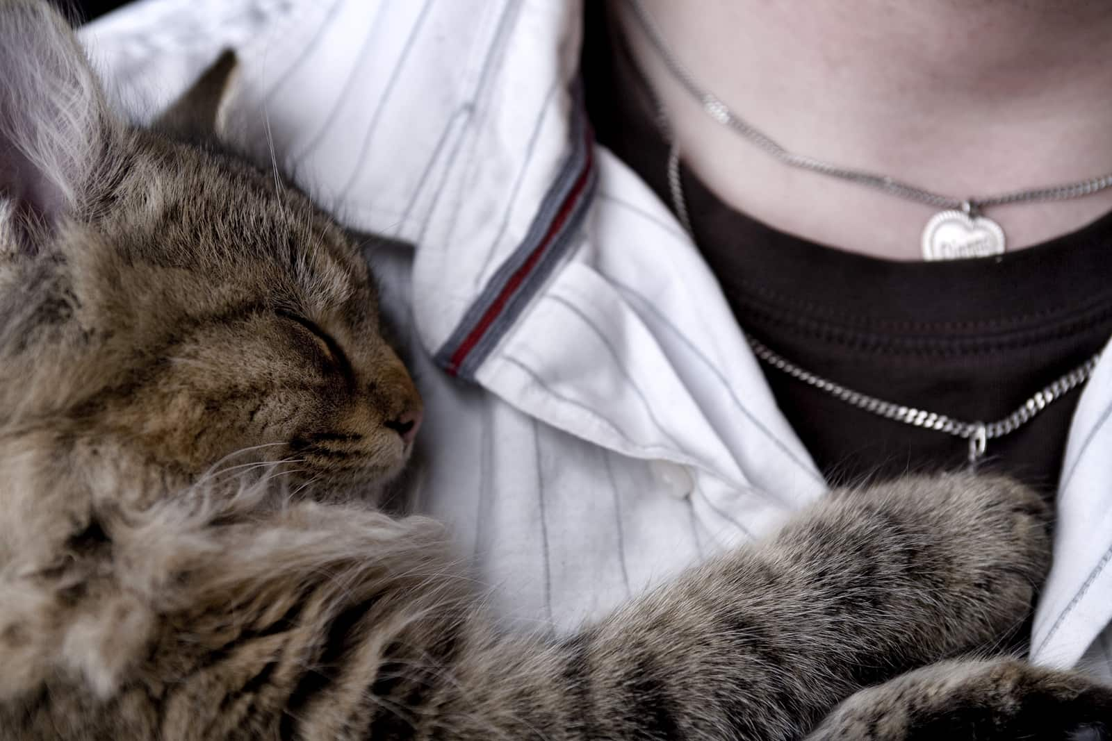 Cat snuggled up on human's chest.