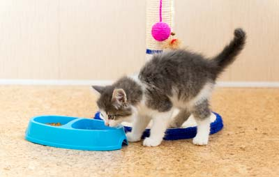 The Kitten Is Eating Dry Food From A Plate