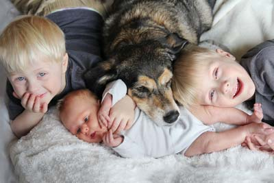 Two young blonde boys and a baby snuggle with a larger brown dog in bed.